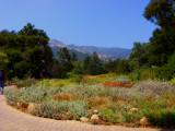 santa_barbara_botanical_garden