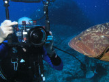 Grouper admiring himself in Bob's wide angle lens