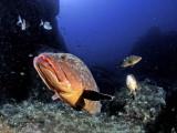 Bob's grouper photo