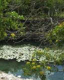 Cenote at Dzilbilchaltun