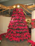 Christmas tree made of poinsettas