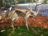 Deer sculpture