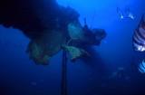 Spadefish (scanned slide)