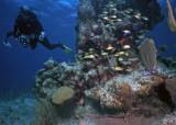 Bob at a coral pillar