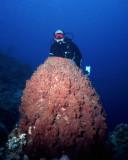 Bob with a large barrel sponge