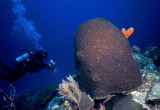 Star Coral at Bennie's Arch