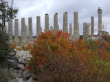 Another view of the temple with fall colors.
