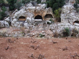 Tombs and grapefines