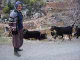 Goat herder with her goats