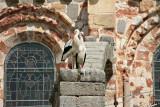 Ávila - storks at the Cathedral