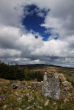 Near Glencullen