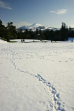 Snow in Powerscourt Gardens