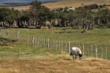 Near Punta Arenas