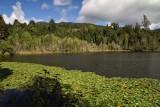 Puyehue - Laguna El Espejo