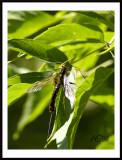 300_af_s_lense_bugs