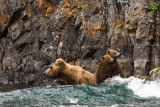 Two little cubs look around while Mom looks for salmon.