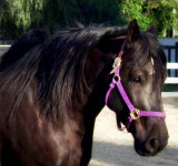 World's Largest Pony..grin
