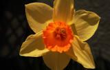 Flower with 10x B&W Macro lens