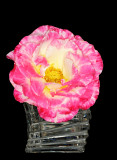 Touch of Class rose in crystal vase