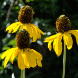 sunflowers 02 detail b