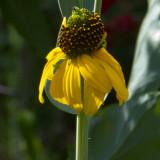 sunflowers 03 detail a