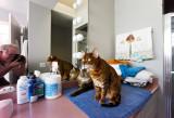 Max & Alexander Pita awaiting Mom in bathroom