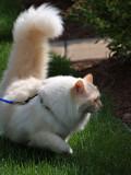 Milo on His Outdoor Adventure