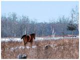 Horse in Tumbleweed Pasture