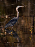 GBH on Golden Pond