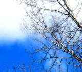 Blanc & Bleu