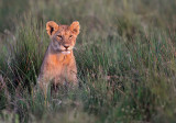 *  T A N Z A N I A:  Ngorongoro N.P., Ndutu lake and plains, Serengeti, Lake Natron and Lake Manyara.