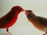 red_birds_2010