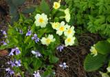 spring colour,smiling through