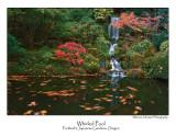 Whirled Pool.jpg