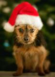 Leo posing on Christmas Day