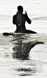 Surfer incantation and pelican