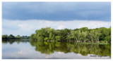Fox River, upstream, Fayban Forest Preserve