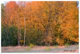 Fall color2, Kane County