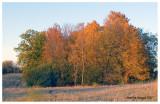 Fall color1, Kane County