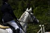 Rasta horse