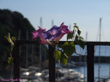 Flowers on the bay