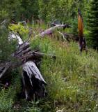 Dream Lake Trail RMNP
