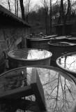 Reflections  DSC_5272