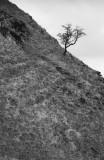 Hadrians Wall Walk DSC_6227