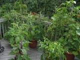 IMG_6195 Happy Garden