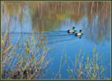 P1070394 Fletcher Park Pond