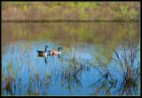 P1070392 Fletcher Park Pond
