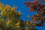_MG_9591 Polarized Color