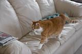 _MG_9908 Cat Prance