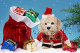 Mercy's Christmas Card